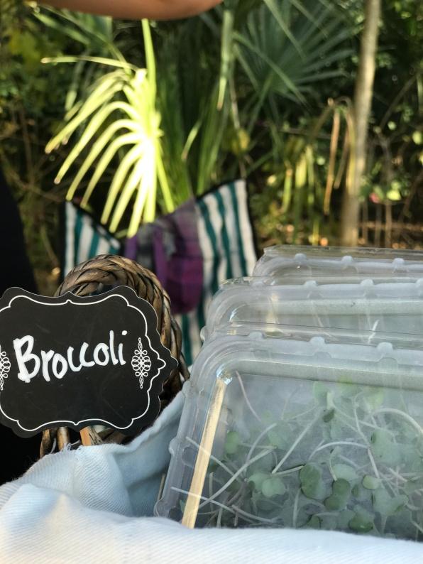 dgf_broccoli